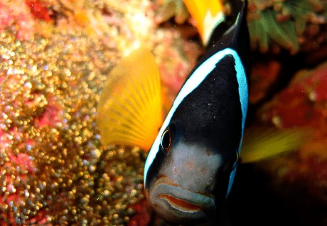 Scuba Diving Izu