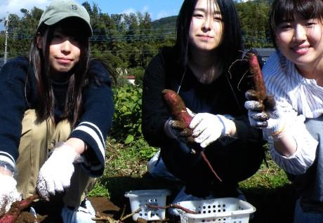 Vegetable Harvest & BBQ